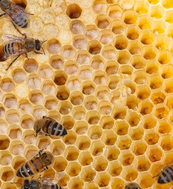 Bierne gør det indledende arbejde. Foto:Fotolangeland