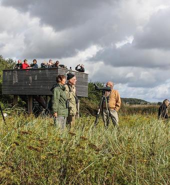Frivillige afholder mange forskellige arrangementer, hvor alle er velkomne til at komme og høre om fuglene og den natur, de lever i. Foto: Lise Nielsen