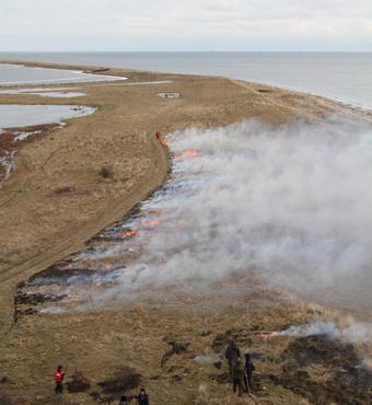 Hyllekrogtangen på Lollands sydspids brændes delvist af for at komme den invasive art 'Rosa rugosa' (hybenrose) til livs. Foto: Allan Gudio Nielsen