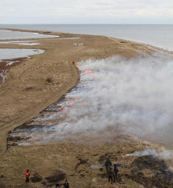Hyllekrogtangen at the southern tip of the island of Lolland is burned to combat encroachment by the invasive shrub Rosa rugosa. Photo: Allan Gudio Nielsen