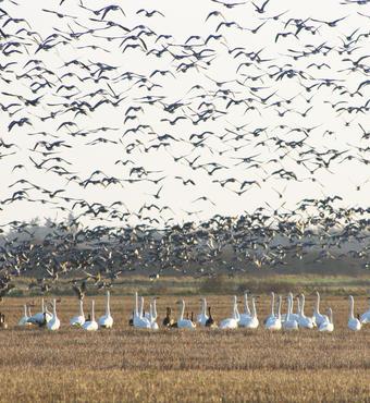 Aage V. Jensen Naturfond erhvervede i 2010 Filsø i Vestjylland for at genskabe søen efter 160 års dræning. Filsø var i forhistorisk tid Jyllands største sø. I 2012 blev søen genskabt efter et omfattende naturgenopretningsprojekt med særligt fokus på fugleliv. Blandt andet er der anlagt nye vandrestier langs søbredden, opstillet fugletårne og anlagt fugleøer, så både lokale og turister fremover kan få enestående naturoplevelser