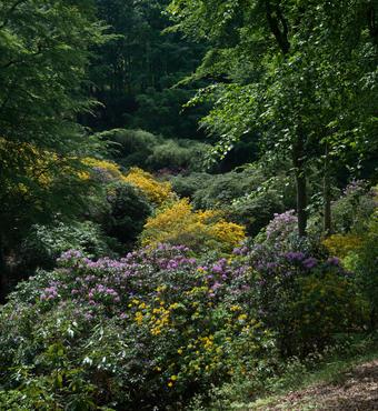 Smuk natur klar til invasion Foto:Fotolangeland